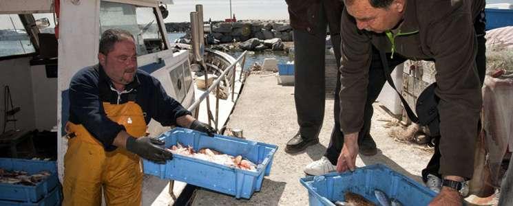 pesca al maresme