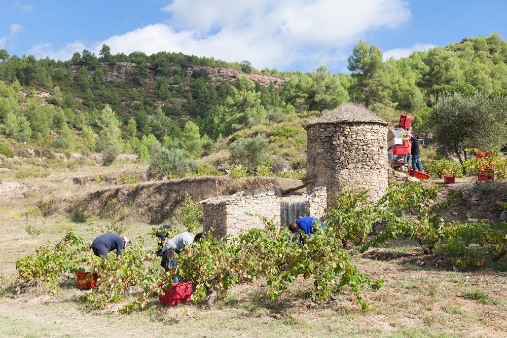 El Camí de la Transhumància d'Avinyó i el vi de Tina d'Abadal reben el premi Viu la Pedra Seca