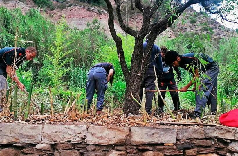 sallent horticultura