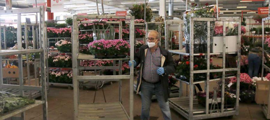 Un florista amb mascareta arrossega un carretó amb plantes al Mercat de Flor i Planta Ornamental. (ACN).