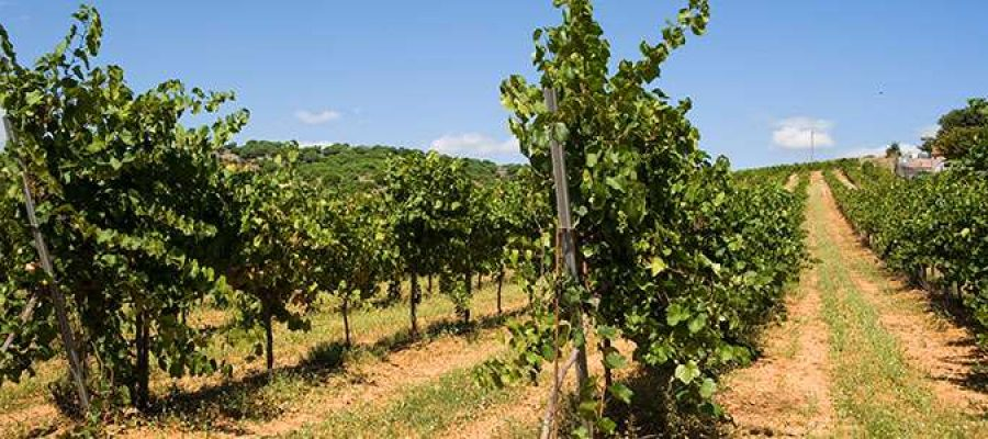 Alella és un dels municipis amb una renda per habitant més elevada (Foto: Ajuntament d'Alella).