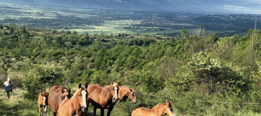 Unió de Pagesos reclama que l'adequació dels mòduls de l'IRPF 2019 per al sector equí inclogui Ripollès